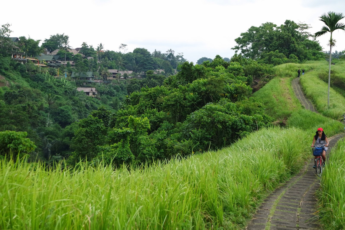 Bali Bicycle Tour Ubud